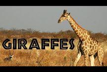 exotické zvieratá - mš