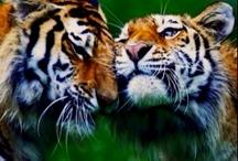My Fav Animals