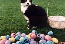 Blackie cat / La mejor información de blackiecat.com
