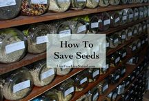 Seed Saving / The most cost-efficient garden is one that you don't have to pay for the next season. By saving as many seeds as possible from your current garden, you are well on your way to saving money!