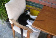 Любовь к котам / Фотографии котов