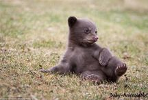 Baby Animals / Baby Animal pictures