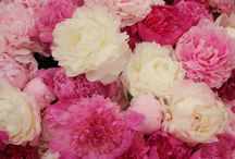 Peonies / Such beautiful, delicate flowers, Peonies are one of our big time favorites!