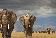 Wildlife in Nature / Wildlife, Animals, Wildlife Conservation, Save Animals, Endangered Animals