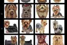 Yorkie Terrier