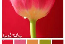 Colour Palette Ideas