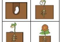 Spring & plants