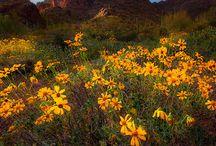 States   ( Arizona )