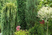 Ogródek-kwiaty, drzewka