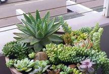 PCS succulent garden