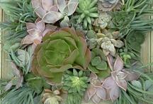 Botanical Garden Shows