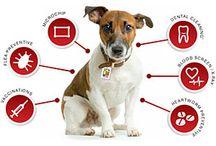 Pet insurance articles / Pet insurance articles