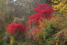 autumn forest / Domaine Bois Des Rêves Belgium