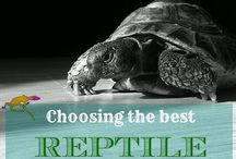 Reptiles & Desert Critters / Reptiles that we love and some we don't really love, but like to watch.