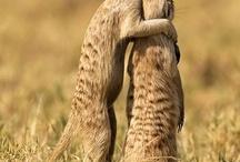 Fuzzy Animals / by Cindy Laskoski