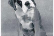 doggies / alleen maar leuke honden,,,