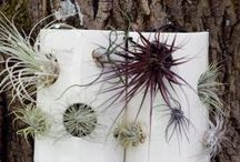 Garden / Garden know-mes / by Beth Rutter