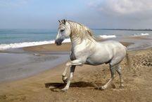 chevaux / Chevaux