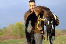huntingwithagoldeneagle-amazingshortmovie