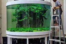 tropical tanks