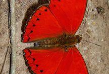 borboletas.