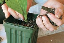 Záhradkárčenie