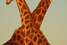 Animals / by Krystel Nassif