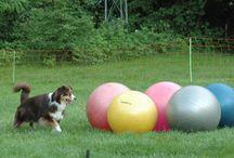 Treiball / Foto's van trainingen of wedstrijden