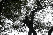 Bomen / Bomenfotoos