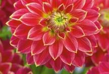 plants, flowers, etc... / by Diana Tadlock