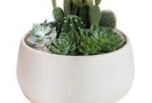 cactus ideas