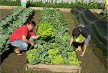Agricultura / Coleccionar boas dicas ligadas a este tema, a pensar na minha horta!