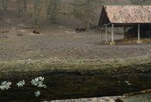 Rezervatia naturala zimbri - Hateg, Romania