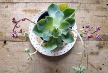 Plants and garden ideas