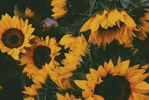    let it bloom /    let it grow