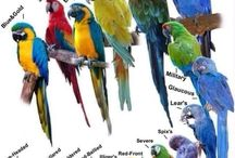 macaws & friends
