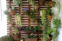 plantas + palet