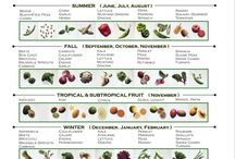 Vegetables / Planting and caring for vegetables
