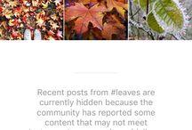 Social media curiosities