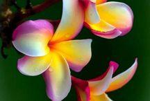 Živé květy