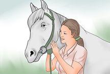 Horse stuff