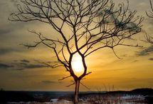 stromy / nevšední stromy
