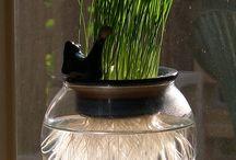 Cats -> Grass