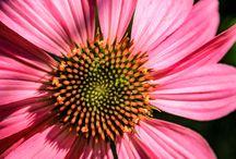Flower Photography / Macro flower photography