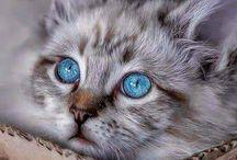 gato ermoso