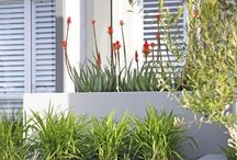 Feature Pots and Containers / With backyards continuously shrinking, space for garden beds can become impractical. Pots, hanging baskets and planter boxes are the perfect solution to ensure maximum green features. #gardendesign #landscaping #landscapedesign #pots #plant