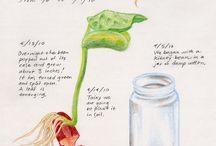 botanikk