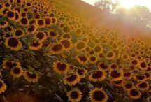 #SUN #Summer