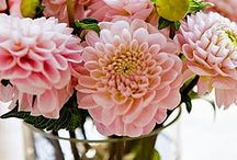Fleur / Pretty flowers  / by Natalie Pitcher