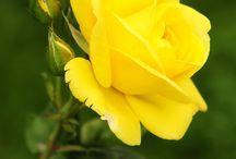 # yellowflowerspinkflowersredflowers
